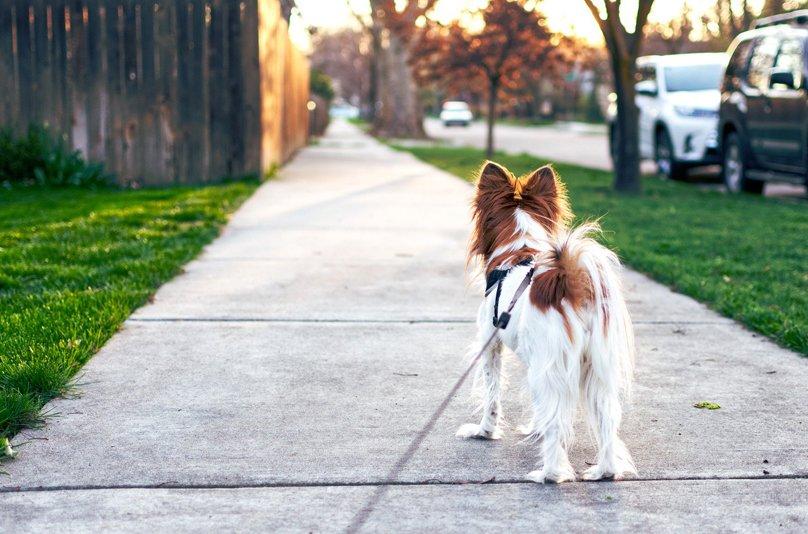 Spacerując