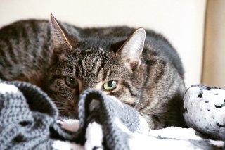 Choroby kotów