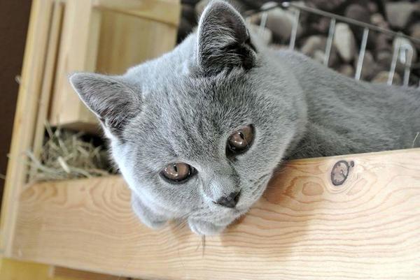 wystepowanie-cukrzycy-u-kotow