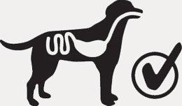 Nadwaga u psa