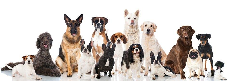 male-rasy-psow-dla-dzieci