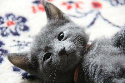 karma dla kotów z niewydolnością nerek
