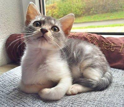 czego-nalezy-unikac-w-zywieniu-kota