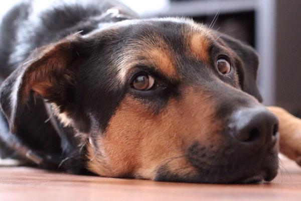 zestresowane-psy