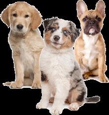 aktywne-wakacje-z-psem-jak-sie-do-nich-przygotowac