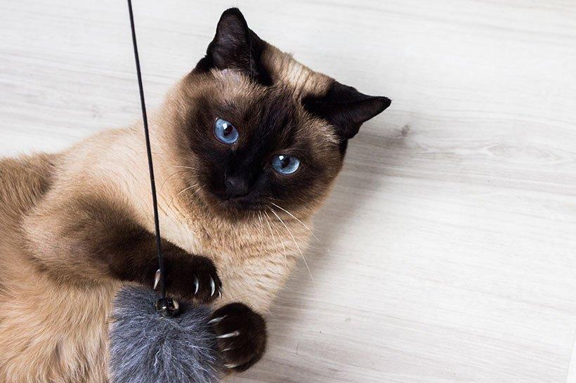 Kot wymiotuje na skutek choroby