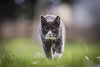karma-sucha-jaka-karma-dla-kota-bedzie-najlepsza