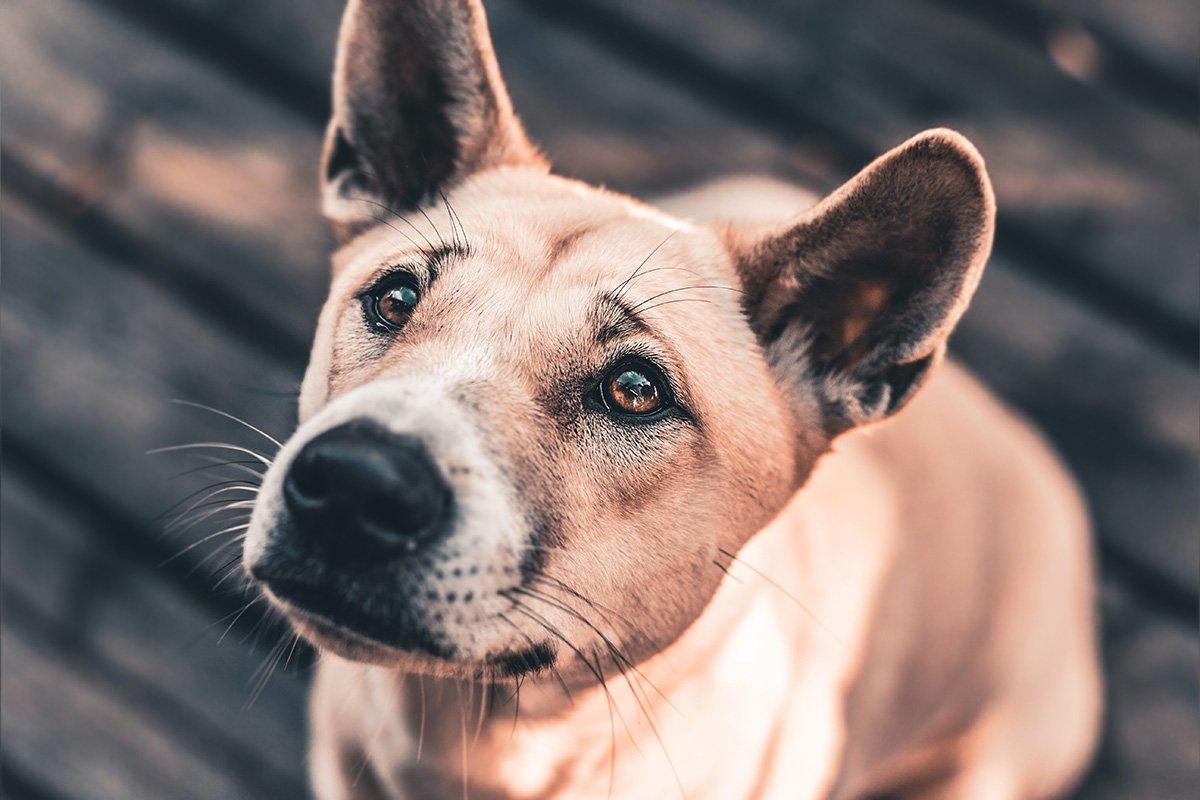 Przyczyny zapalenia ucha u psa