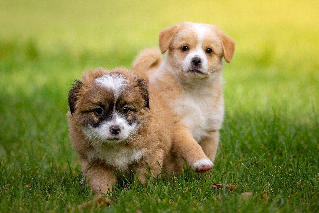 Karma dla szczeniaka musi być dostosowana do psiego wieku